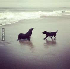 A sea lion came out to play with a dog on the beach!