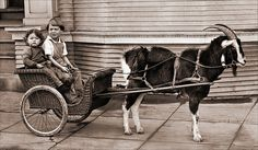 Children With Goat Cart by newmexico51, via Flickr