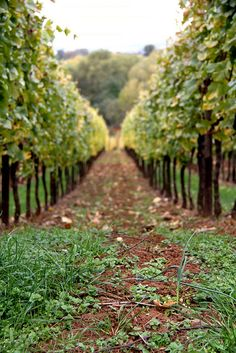 France - specifically french vineyards