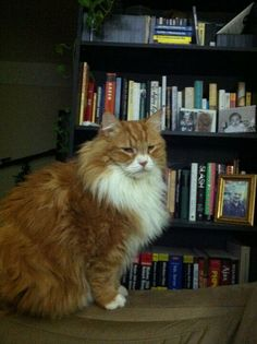 Sherlock is one dignified little lion. Oh my. We can't even pun elementary, we're so impressed. #NYPLLittleLion