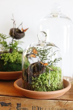 tiny terrariums
