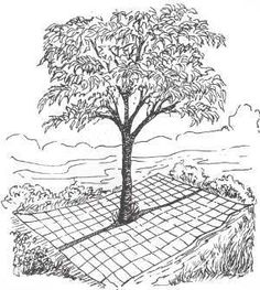 Deer-proof Apple Trees: I did this last spring in my deer infested field and haven't had a problem since. Fencing is laid in  two sections around a fruit tree.  The tree can be watered, fertilized, sprayed and harvested with the wire in place. It really works!
