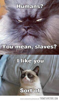 Sinister Cat Meets Grumpy Cat…