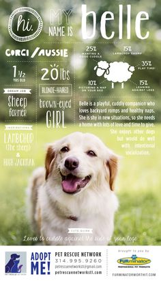 Hi. My name is Belle. I'm looking for my forever home. #pet #adoption #poster #dog #design #infographics