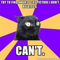 hahahahaha anxiety cat ha smade my morning