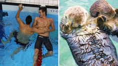 This Thing Looks Like That Thing: Adorable Olympic Swimmers vs. Hand-Holding Otters