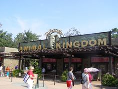 Animal Kingdom, FL