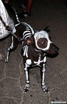 Halloween dog...DYING!!!!!!!