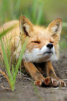 foxy stretching.