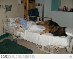 animals, heart, friends, pet, therapy dogs