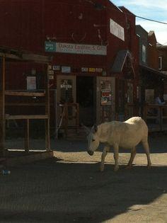 Oatman, Arizona  Where the donkey's run free