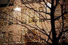 pearl, winter, season, pari, wonder time, holiday lights, christmas lights, holidays, christma light