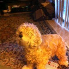My Lillie!!