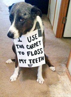 I use the carpet to floss my teeth.