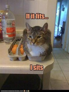 funny pictures - If it fits...I sits
