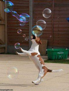 Bubbly fun