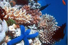 marin, great barrier reef, blue, water world, scuba diving, sea, place, bucket lists, coral reefs