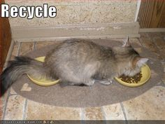 jokes, recycling, funny pictures, funny cats, funni, funny images, humor, kittens, kitty