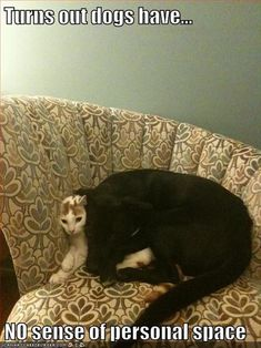 dogs and personal space