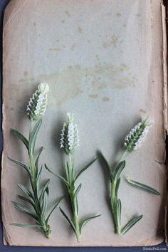 sania-pell-spring-flowers-2