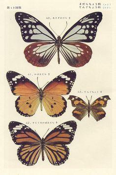 papillon 13 by pilllpat (agence eureka), via Flickr
