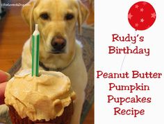 Rudys Birthday Peanut Butter Pumpkin Pupcake recipe for dogs is easy, healthy, and tasty, too.