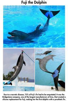 Inspiring animals that use prosthetics…