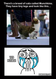 cats, anim, laugh, awwwww, cute and funny, funni, allerg, humor, ador