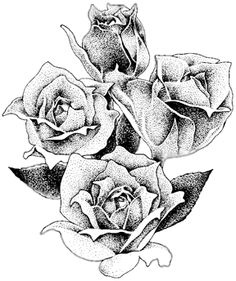 Pencil Drawing of Roses: Nature's Gift To The Art World
