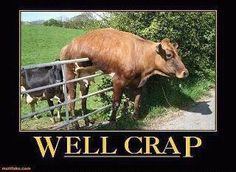Someone please help this cow :o) humor