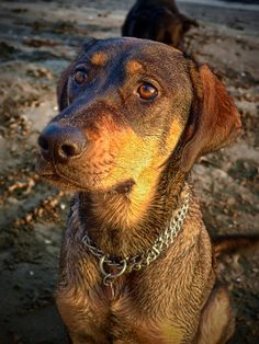 Home remedies for treating dog diarrhea