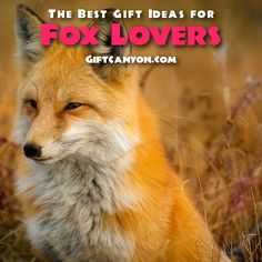 The Best Gifts for F