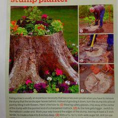 Tree stump flowers!