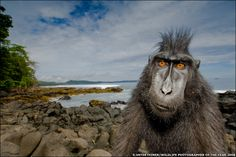 Trouble-maker (Stefano Unterthiner/ Wildlife Photgrapher of the Year)