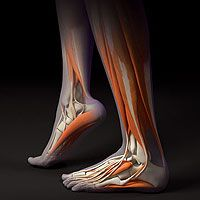 Build Stronger Feet and Ankles | Runners World