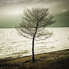 tree by the shore