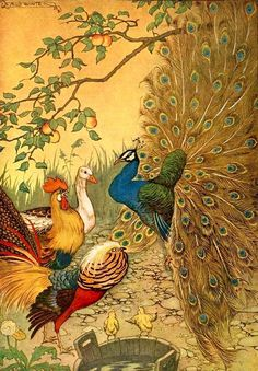 golden book illustration:  illustration by Milo Winter  THE PEACOCK from The Aesop for Children (1919)