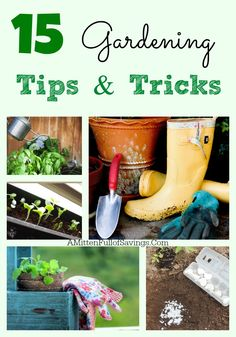 15 Gardening Tips and Tricks- great gardening tips to help you get going this year! Learn a new trick for your garden this year!  #garden #gardening