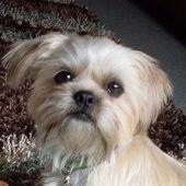 anim activ, animal rescue, anim rescu, help abus, abus animal
