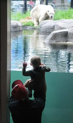 At Como Zoo, visit the polar bears and see a sea lion show