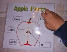 Apple Week Activities with printables