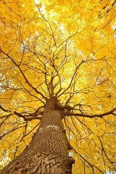 Yellow in Autumn.
