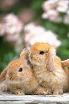 cuddling~ Bunnies