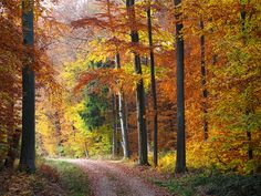 In the Autumn Forest, Germany