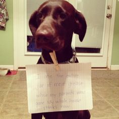 dog shaming at it 39 s best on pinterest dogs personal space and tennis. Black Bedroom Furniture Sets. Home Design Ideas