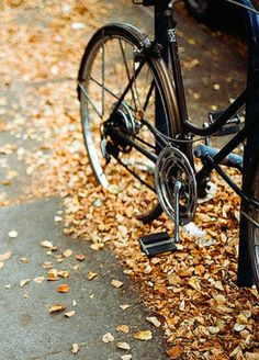 Fall bike rides through the leaves.