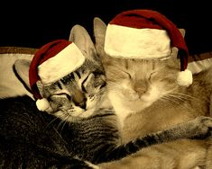 Holiday stress and your cats: how to keep them calm and healthy throughout the season