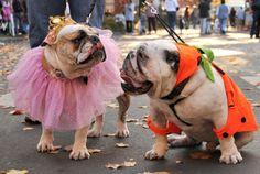 Halloween pet safety tips #budgettravel #halloween
