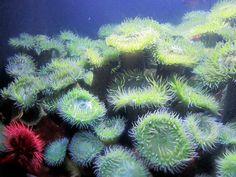 Plants of the ocean