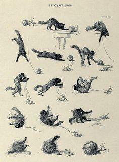 Le Chat Noir - I love Steinlen's cats